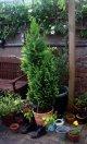 Balkonpflanzen für Herbst und Winter