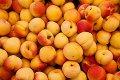 Apricot Brandy selbermachen - Rezept