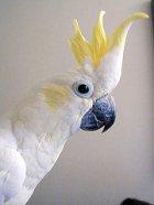 Spielzeuge für Vögel selber machen
