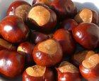 Basteln mit Kastanien - 3 Ideen: Kastanientiere, Türkranz und Wurfkastanien