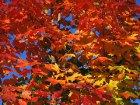 3 Bastelideen für Herbst und Winter