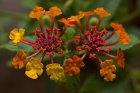 Die schönsten Balkonpflanzen für einen sonnigen Balkon