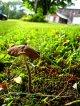 Anleitung: Moos im Rasen entfernen