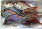 Rezept: Fischfond selber machen