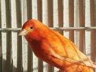 Bauanleitung: Eine Vogelvoliere selber bauen