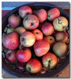 Apfelmus aus heimischen Äpfeln selber machen