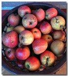 Apfelsaftkonzentrat selber machen - einfach, lecker und ohne Zusätze!