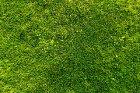 Rollrasen richtig verlegen - so wächst der Rasen richtig an
