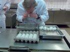 Anleitung Eier ausblasen