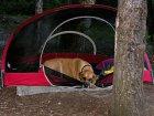 Mit dem Hund campen gehen - so macht man alles richtig