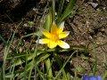 Frühjahrsputz im Garten - so bereitet man den Garten optimal auf den Frühling vor