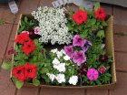 Tolle Ideen für einen schön bepflanzten Balkon im Frühjahr
