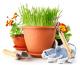 Grundlagen für einen schönen Gemüsegarten - so pflanzt man richtig an